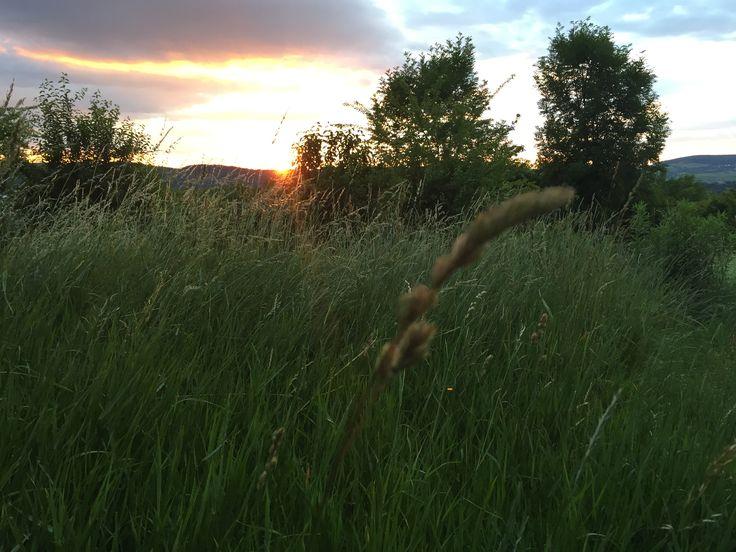 #nature #sunset