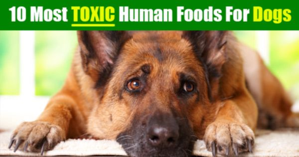 10 toxic food to The world's 10 most dangerous foods people actually eat  put simply, it means all the waste and toxic substances are filtered directly into the animal's skin so is essentially a recipe for .