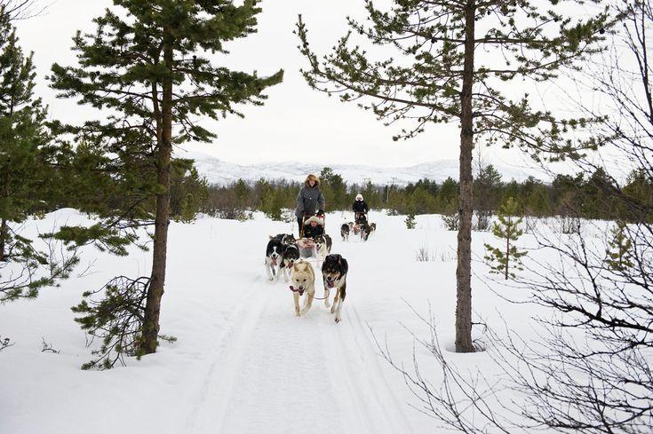 Eine Hundeschlitten-Fahrt im Winterurlaub in Norwegen ist ein unvergessliches Erlebnis.