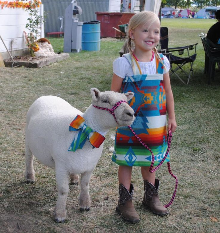 17 Best Images About Southdown Babydoll Miniature Sheep On