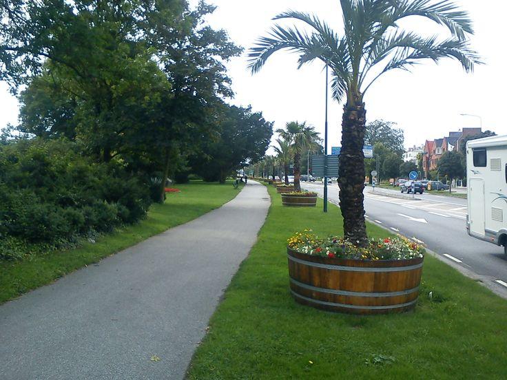 Trelleborgs palmer