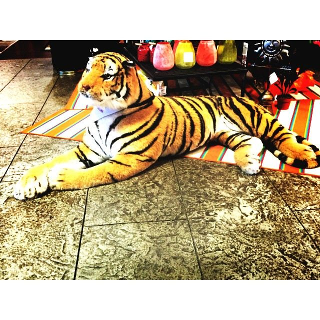 american furniture warehouse american furniture hashtag tigers forward