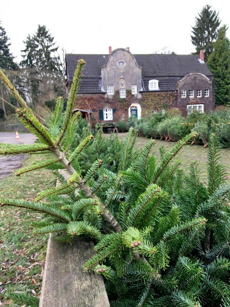 Weihnachtsbaum Kaufen D Sseldorf My Blog