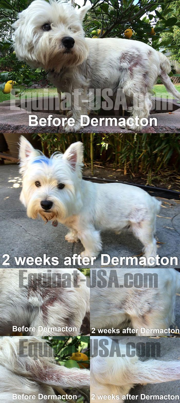 Bosco is a 5 year old Westie. He had extreme itchy skin for his entire life. I tried so many anti-itching products and special diets. Nothing worked.Bosco is 100% better in only two weeks with DERMACTON itchy DOG skin cream and DERMACTON skin conditioning SHAMPOO BAR for dogs. He stopped scratching instantly with the cream and I only have to apply it once a day. I especially love the herbal smell of the products. Thank you Dermacton!!!