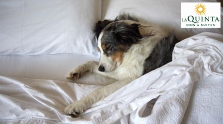 Next trip you take with your PET | Find Pet Friendly Lodging by state and city. Woof!