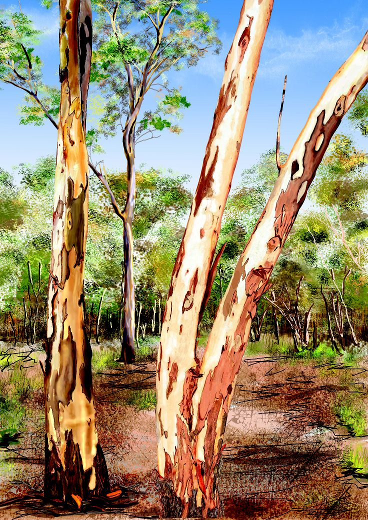 Two Gum Trees Majestic towering Eucalypts dominant the surrounding country side. Striking autumn colours of creams, reds, browns and golds radiate as the trees shed their peeling bark.