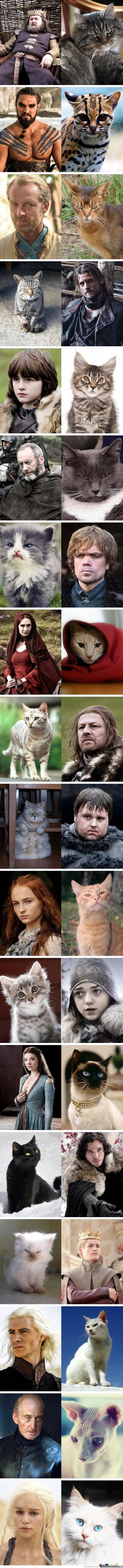If GOT were cats