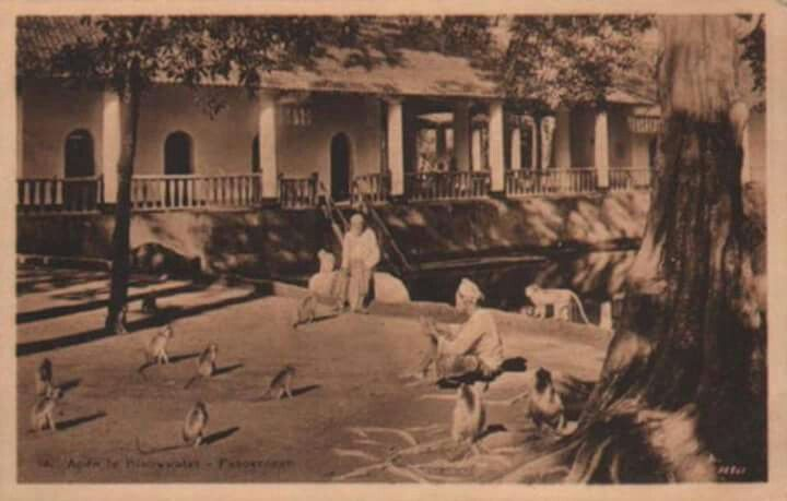 Monyet di Permandian Banyu Biru, Pasuruan, Jawa Timur 1930