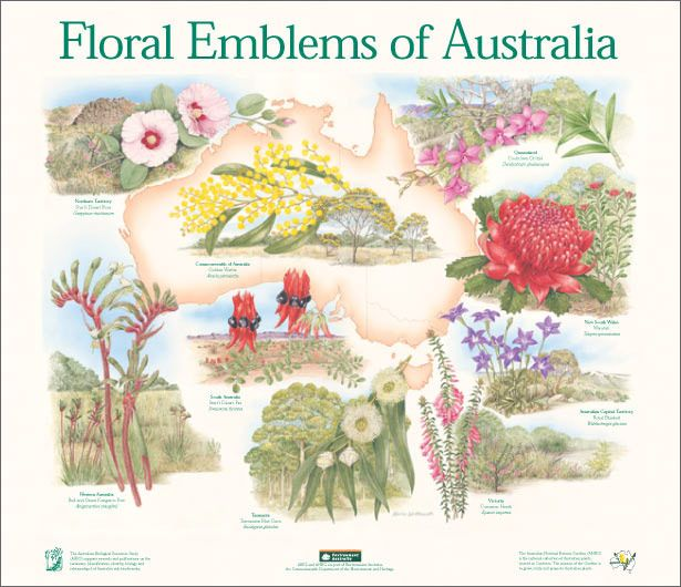 Floral Emblems of Australia poster that includes a link to each states emblems. Great info!