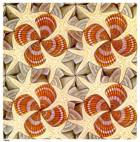 Shells and Starfish - M.C. Escher