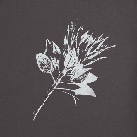 King Protea – White on Grey