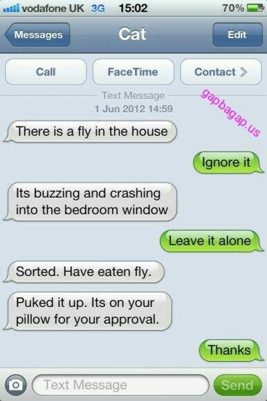 Hilarious Text About Cat vs. Fly