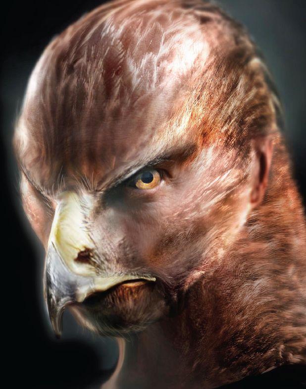 Steinadler - Hawk-like creatures with exceptional vision ... Grimm Steinadler