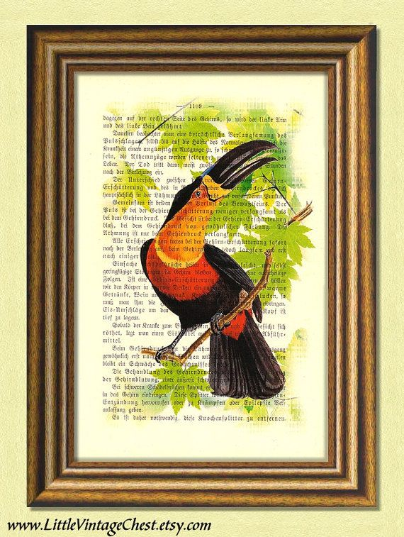 Black Friday! Buy 1 Get 2! - TOUCAN BIRD  Dictionary art print Vintage by littlevintagechest, $7.99