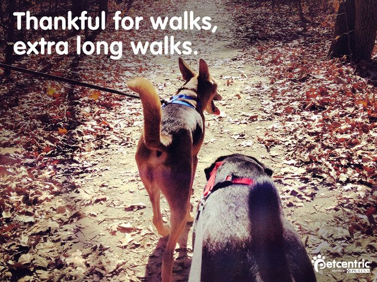 Our four-legged friends are thankful for the small things.