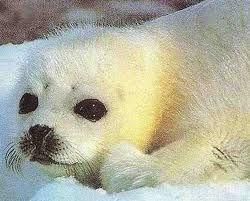 zeehonden - Google zoeken