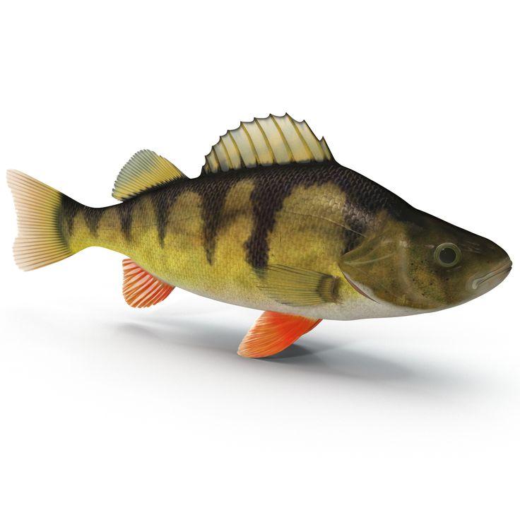для картинки про рыбу окуня сегодня рассказ