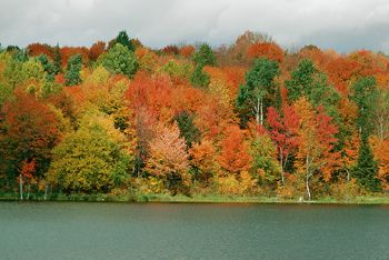 Something pretty to help those of us that have to wait another month or two before the leaves start changing.
