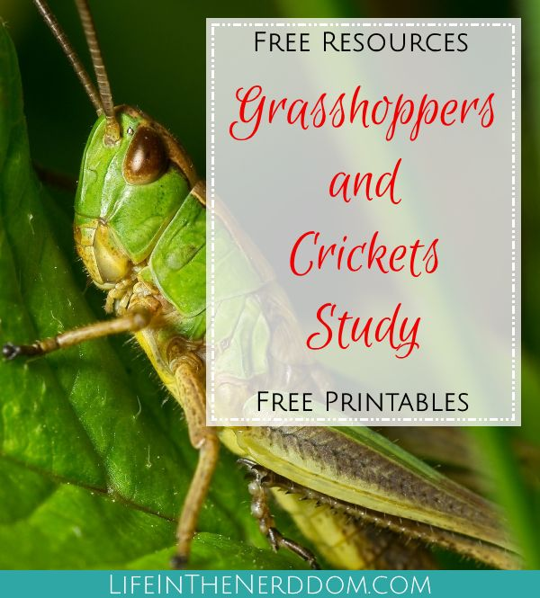 Grasshoppers and Crickets Unit Study for Homeschooling at LifeInTheNerddom.com