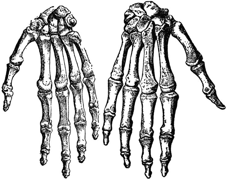the 25+ best human hand bones ideas on pinterest | hand bone, hand, Cephalic Vein