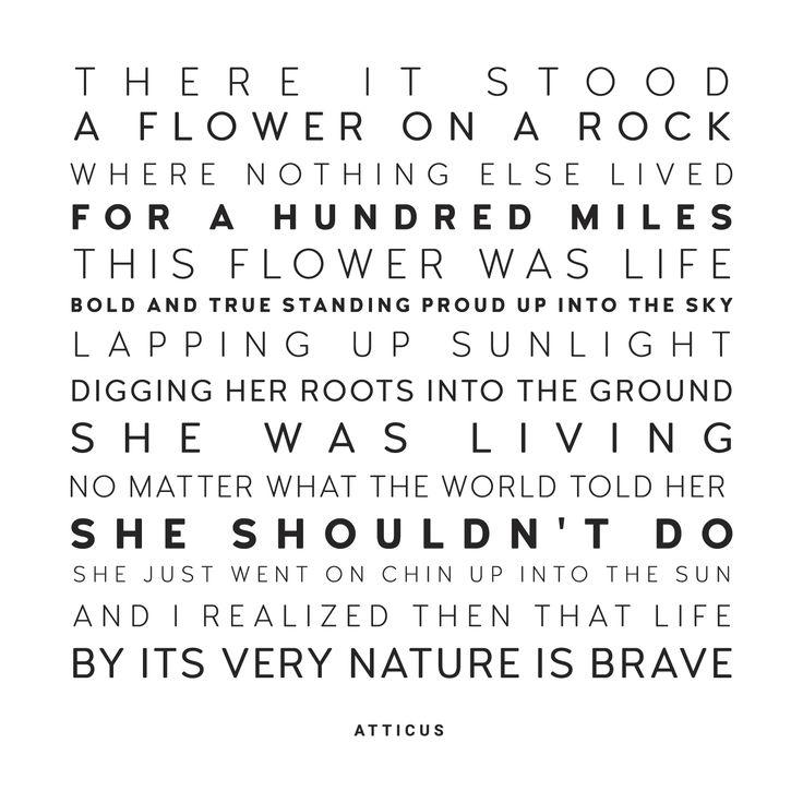 'Flower on a rock' @atticuspoetry #atticuspoetry #atticus #poetry #poem #quote #words #love #beauitful #flower #ohio #brave thx @laurenholub