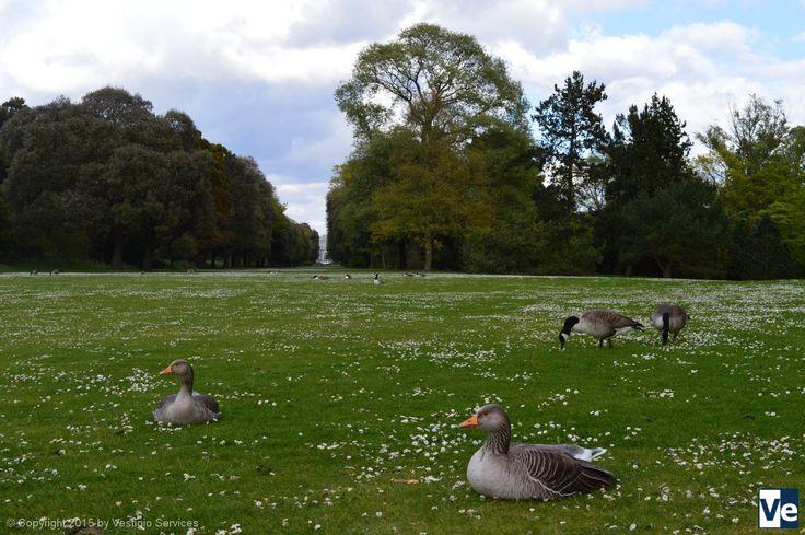 Kew Gardens: Весна в королевских садах Кью