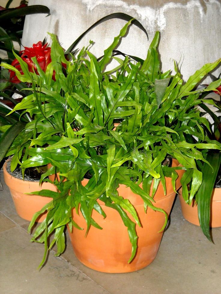 106 Best Ferns Images On Pinterest Ferns Plants And