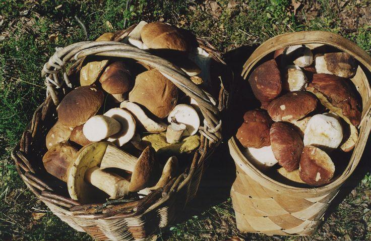 Sposoby na grzyby – marynowanie » Uroda i Zdrowie – serwis nie tylko dla kobiet