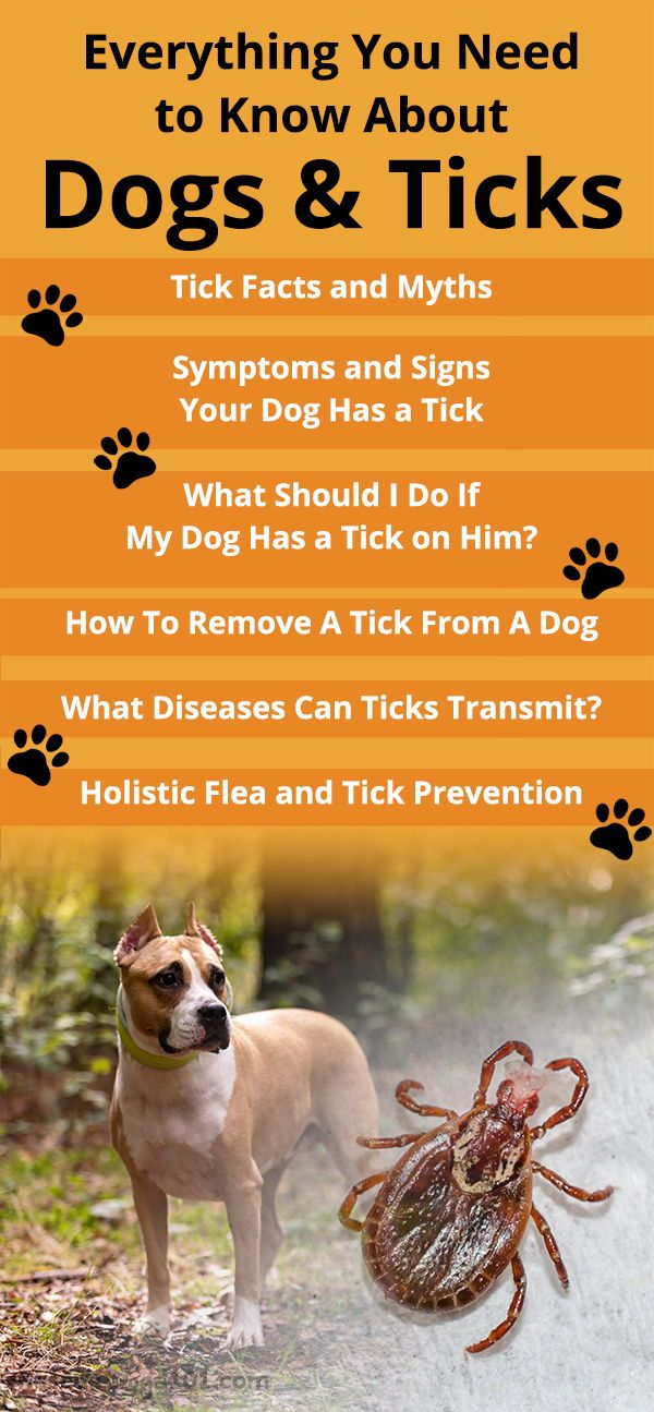 Dogs And Ticks Symptoms And Signs Your Dog Has A Tick Dogs Doghealth Rescuedogs101 Ticks On Dogs Tick Bites On Dogs Dog Health