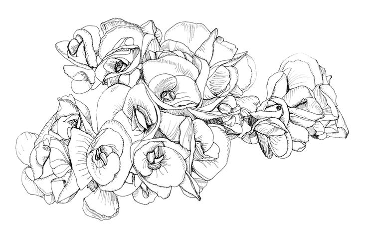 421 best flower coloring images