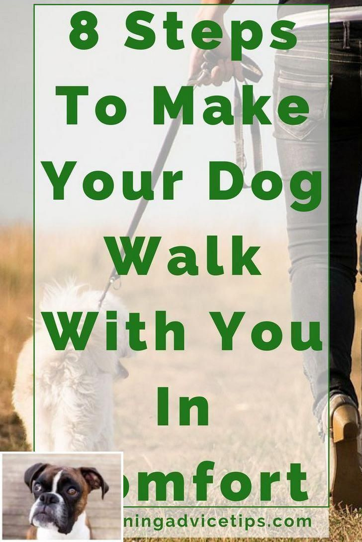 Puppy Dog Obedience Training With Positive Reinforcement