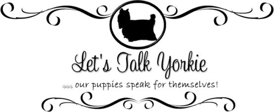 AKC Yorkie breeder NY  The most fabulous dogs ever from this breeder. High quality.