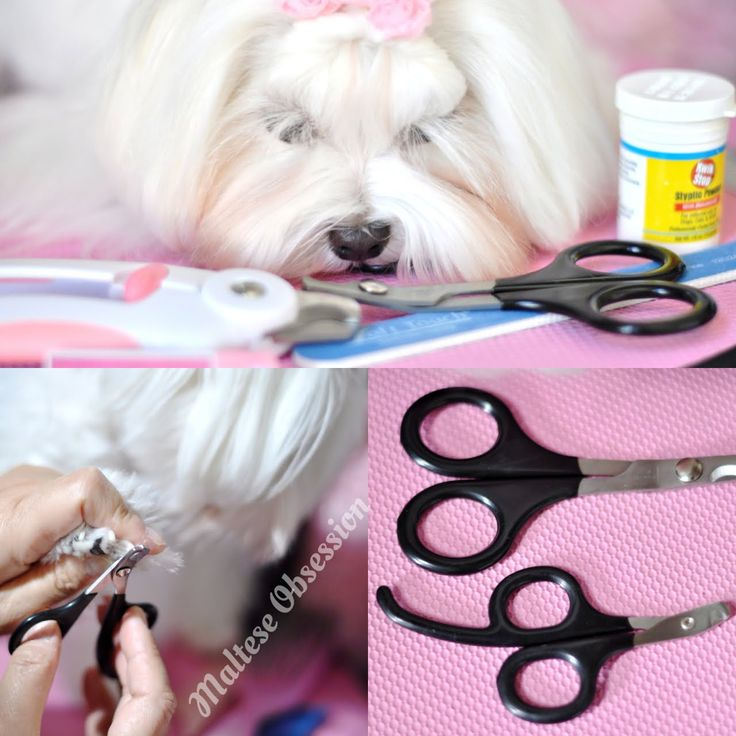 GROOMING NAILS Dolce Paw Spaw How to Trim Nails on Pet