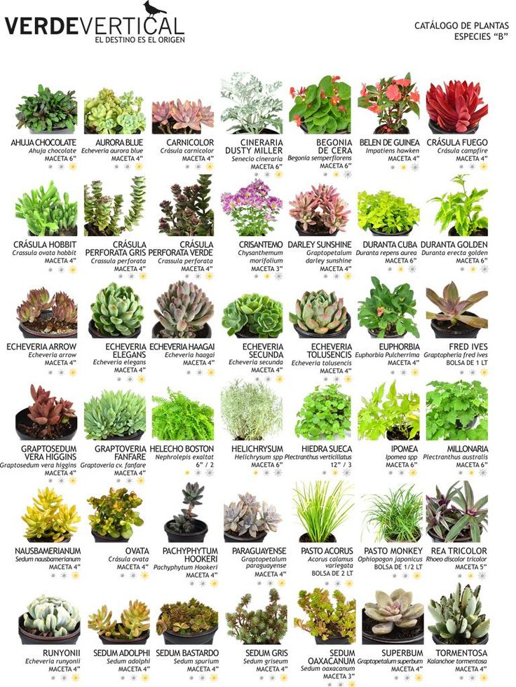 Las 25 mejores ideas sobre jardines verticales en for Arbustos de jardin nombres