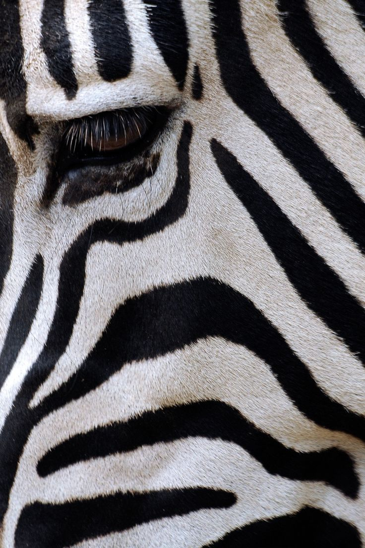 51 best fantastic animals images on pinterest animals nature