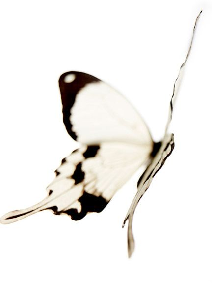 """""""I am a butterfly. When I come out of my cocoon I spread my wings and fly in the sun. I am a butterfly ."""""""