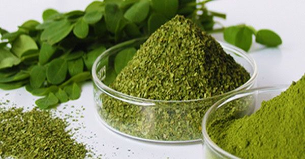 """Moringa oleifera is a plant which grows in South Asia and is a part of the traditional medicine. It is familiar by the name """"drumstick"""" and is a mighty bioactive plant that contains antioxidants. The scientific community confirmed the health benefits of this plant, but it has to be studied and discovered still. It is …"""