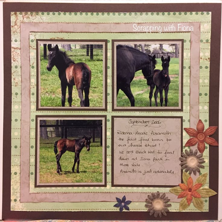 Square photos, double matted, with a shadow box frame effect.    #scrapbooking  #scrapbooklayout  #scrapbookingideas