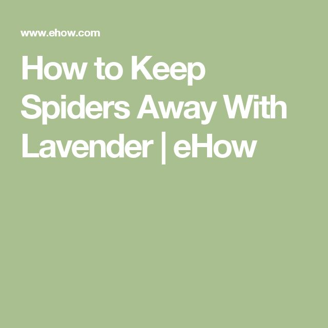 How to Keep Spiders Away With Lavender | eHow