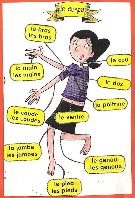 le corps Learn French #frenchimmersion #learningfrench #fle #frenchwords Repin for later :-)