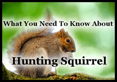 What You Need To Know About Hunting Squirrel