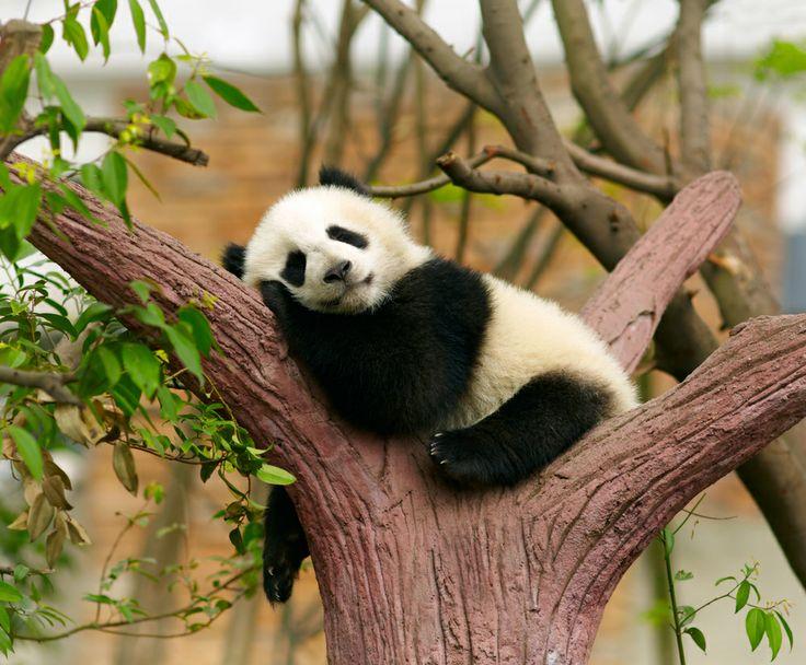 Cute alert!! Have a look at 7 awkward baby animals: http://www.news24.com/travel/guides/bush/cute-alert-7-awkward-baby-animals-20140424