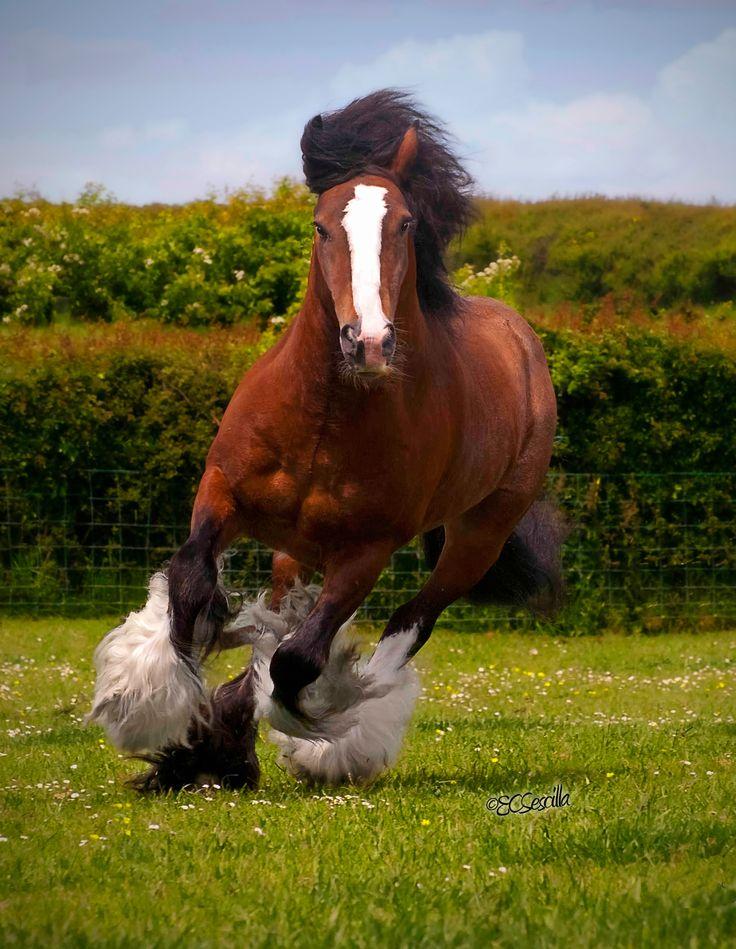 Gypsy in red.......Thomas' Bay Stallion