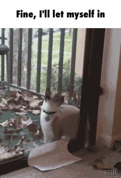 Fine, I'll let myself in GIF