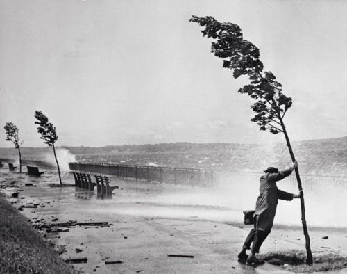 Stanley Hall Man holding onto tree during hurricane Carol New...