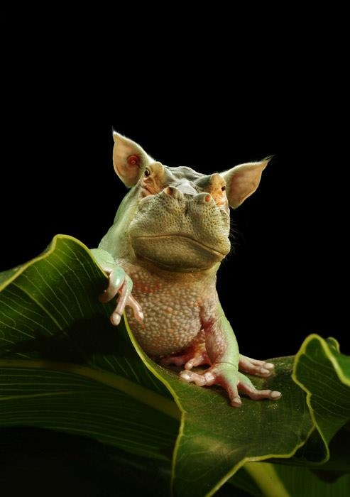 hybrid animals cool | ...