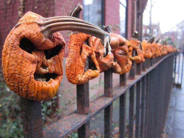 Rotting pumpkin fence post finials. Plus   video blog.