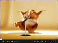 Śmieszny tańczący super Chomik http://www.smiesznefilmy.net/tanczacu-super-chomik #chomik #taniec #animacja