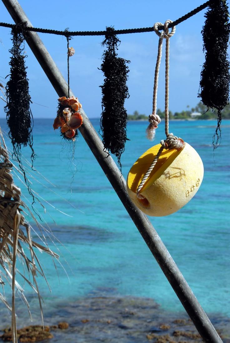 Fakarava..French Polynesia..