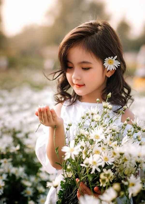 Cúc họa mi là loài hoa nhỏ thường mọc hoang vùng lạnh, có ...